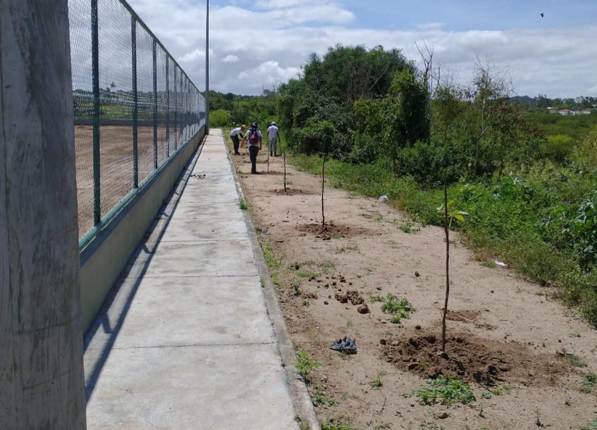 Reeducandos plantam mudas de árvores em Caruaru