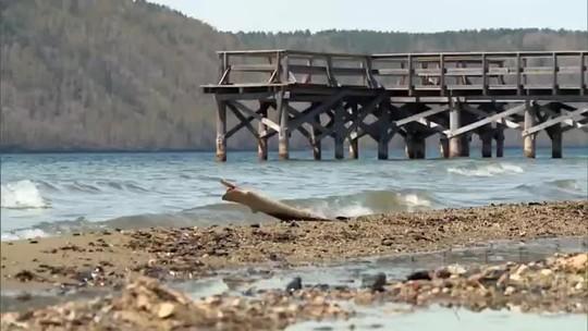 'Cidades e Soluções': Lago Baikal, o maior reservatório de água doce do planeta