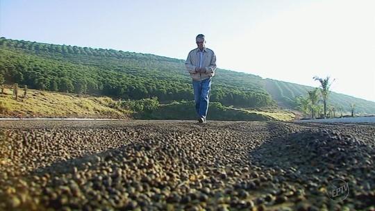 Mais de 70% da safra de café deste ano já foi colhida em todo o país