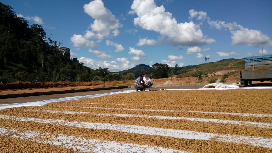 Produtores do Noroeste do RJ conquistam 1º e 2º lugar em competição internacional de cafés especiais e orgânicos