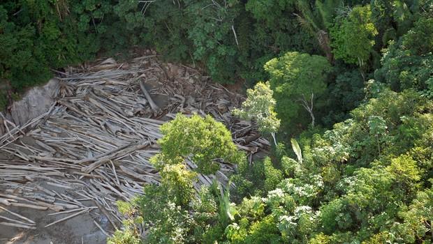 Desmatamento na área da Bacia Amazônica, na Amazônia ; madeireiros ; extração de madeira ;  (Foto: Arquivo/Agência Brasil)