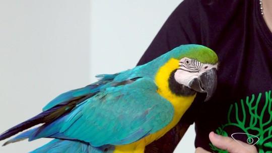 Podrão, Crochê e animais exóticos no AgTV, 03