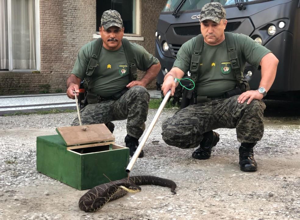 Cobra foi capturada por guardas em São Vicente, SP (Foto: Divulgação/Guarda Municipal de São Vicente)