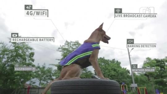 Roupa especial transforma cães de rua em seguranças na Tailândia