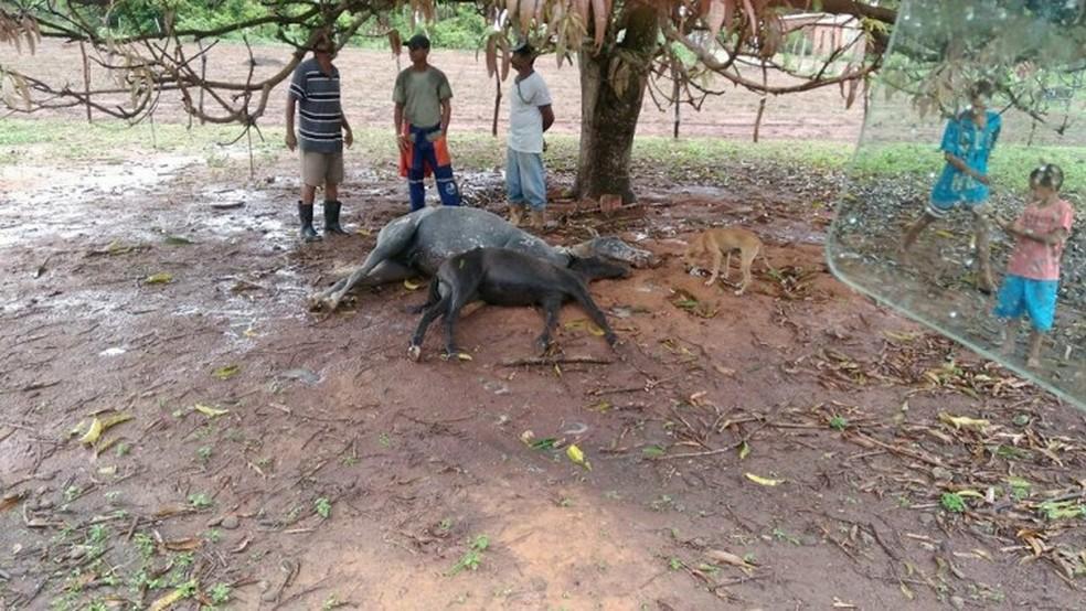 Animais estavam debaixo de uma árvore quando foram atingidos  (Foto: Alisson Silva )