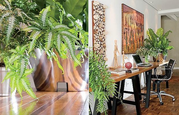 A samambaia-prata é adequada para ambientes internos, seja em vasos ou em jardins de inverno. Externamente, pode ser cultivada em jardineiras, canteiros e vãos entre muros ou paredes (Foto: Casa e Jardim)
