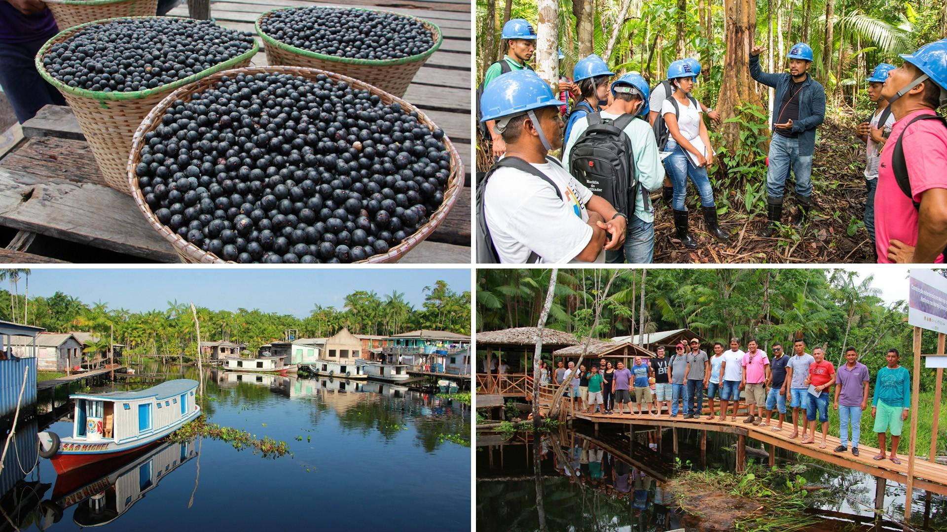 Gente do campo: projeto estimula o cultivo sustentável do açaí nas comunidades ribeirinhas do Marajó