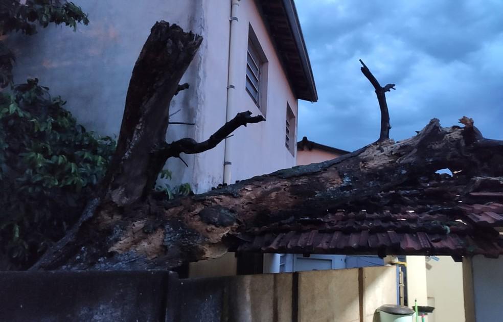 Árvore caiu e atingiu telhado de casa em Ibitinga  — Foto: Corpo de Bombeiros / Divulgação