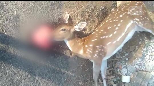 Veado é encontrado morto na RJ-116, em Bom Jardim