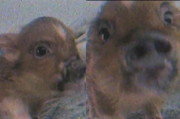 Ariana Grande lança clipe apenas com imagem de seu porquinho (Foto: Reprodução/YouTube)