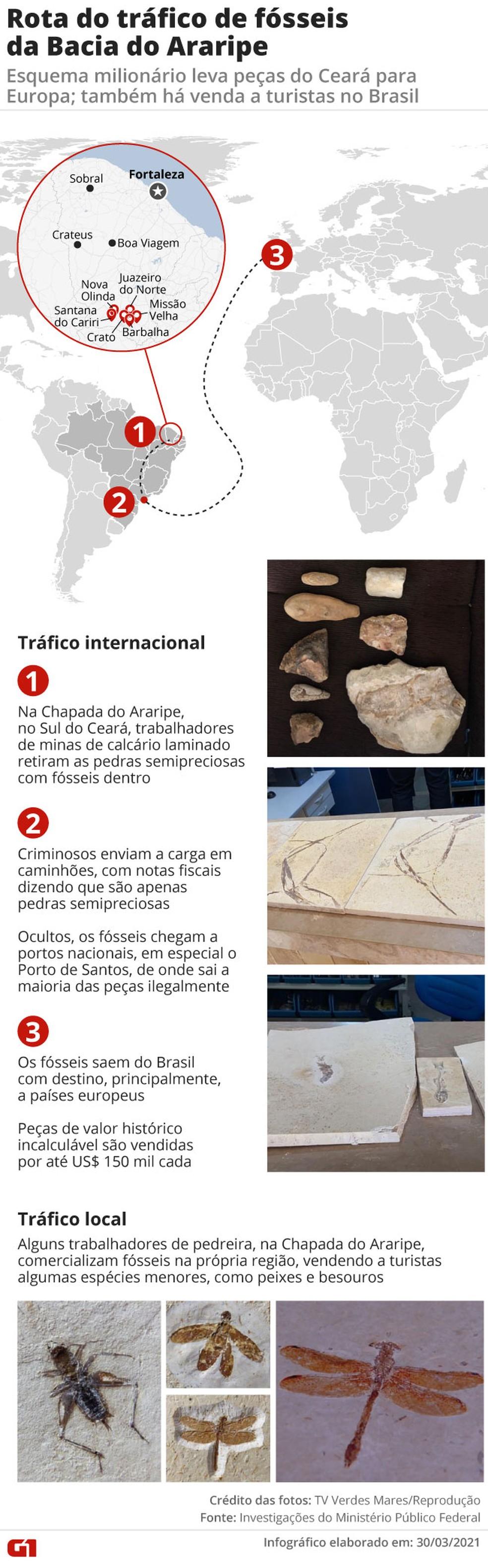 Tráfico de fósseis no Ceará — Foto: Arte/G1