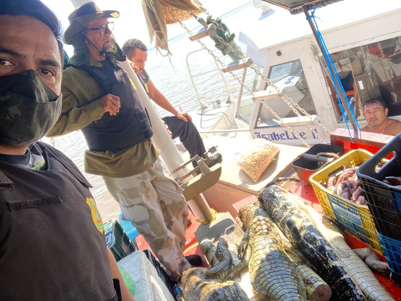 Semma e policiamento ambiental apreendem mais de 200 kg de carne de jacaré em barco pesqueiro