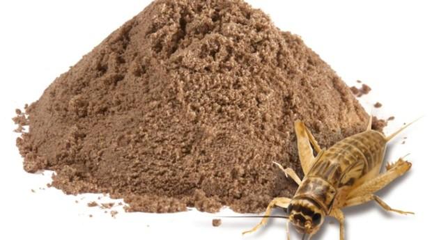 Farinha obtida a partir das larvas de grilos (Foto: Divulgação)