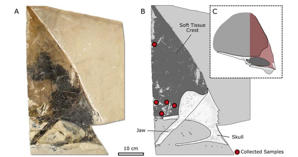 Imagem do artigo mostrando os pontos amostrados no fóssil  — Foto: Divulgação/Scientific Reports