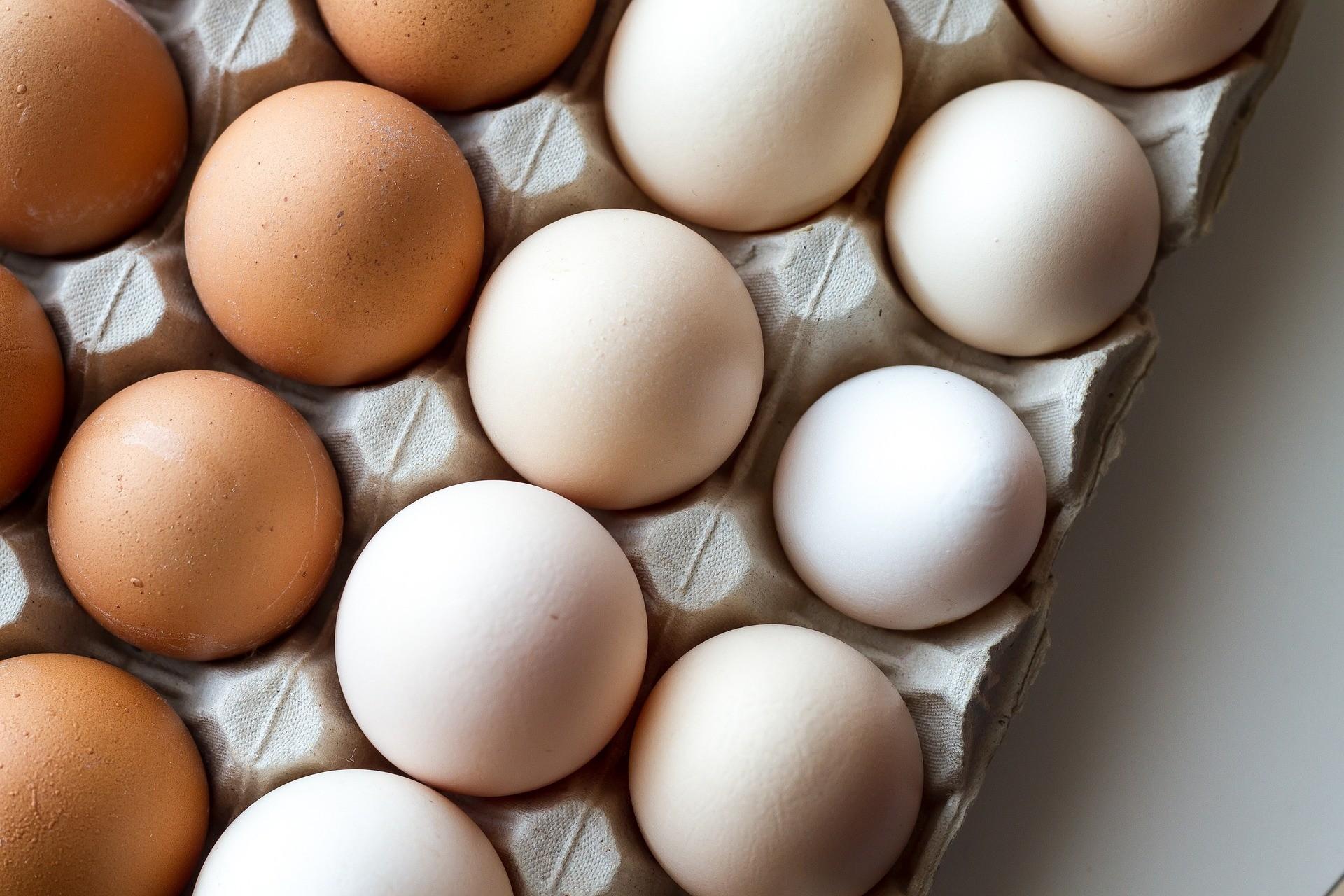 Casca de ovo pode ser usada em enxertos de tecidos ósseos, segundo estudo. (Foto: Pixabay)
