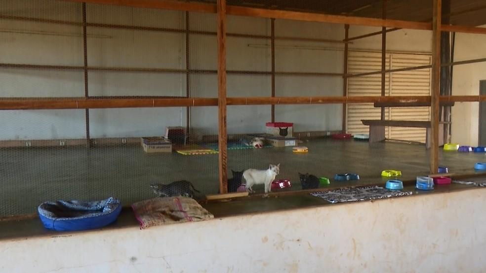 Abrigo cuida de cães e gatos em Cacoal — Foto: Reprodução/Rede Amazônica
