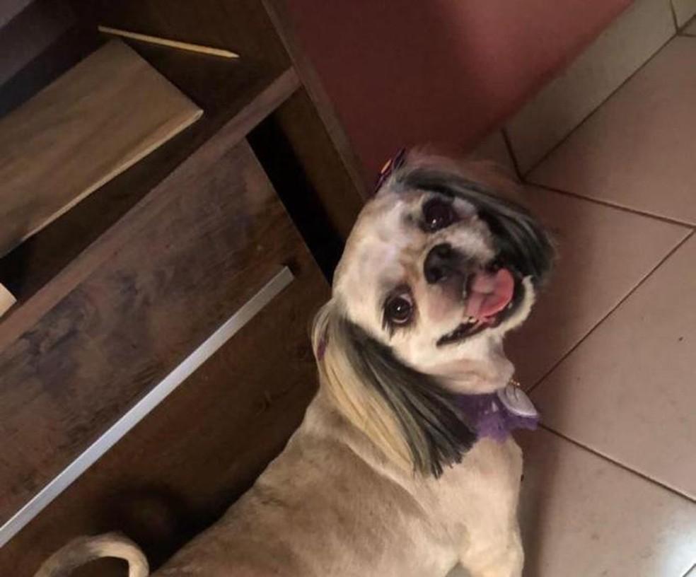 Cachorra morre depois de tentar salvar criança e ser atacada por pitbull no bairro Gasparini em Bauru (SP) — Foto: Arquivo pessoal/ Thaynara Milano