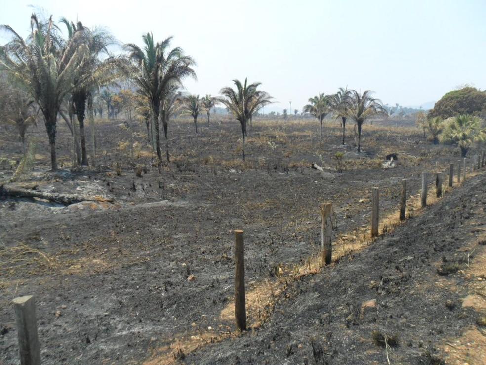 Incêndio deixou 14 fazendas destruídas em Carmolândia (Foto: Divulgação)