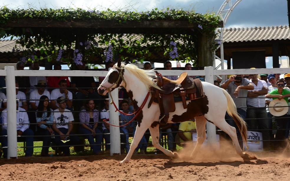 Área de pecuária da Tecnoshow Comigo oferece oficinas de doma racional (Foto: Comigo/Divulgação)
