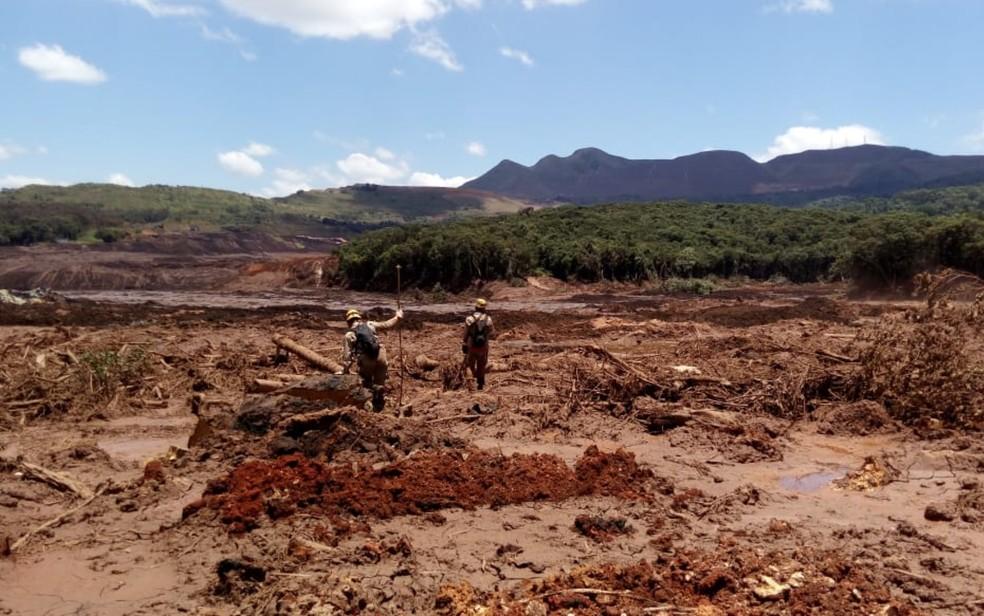 Bombeiros e cães de Goiás ajudam nas buscas por vítimas do rompimento da barragem em Brumadinho — Foto: Divulgação/ Corpo de Bombeiros