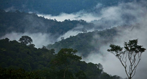 Em meio à crise financeira, Ibama defende retomada do Fundo Amazônia para reforçar orçamento