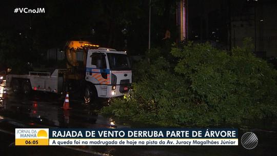 Parte de árvore cai na Avenida Juracy Magalhães Júnior, em Salvador