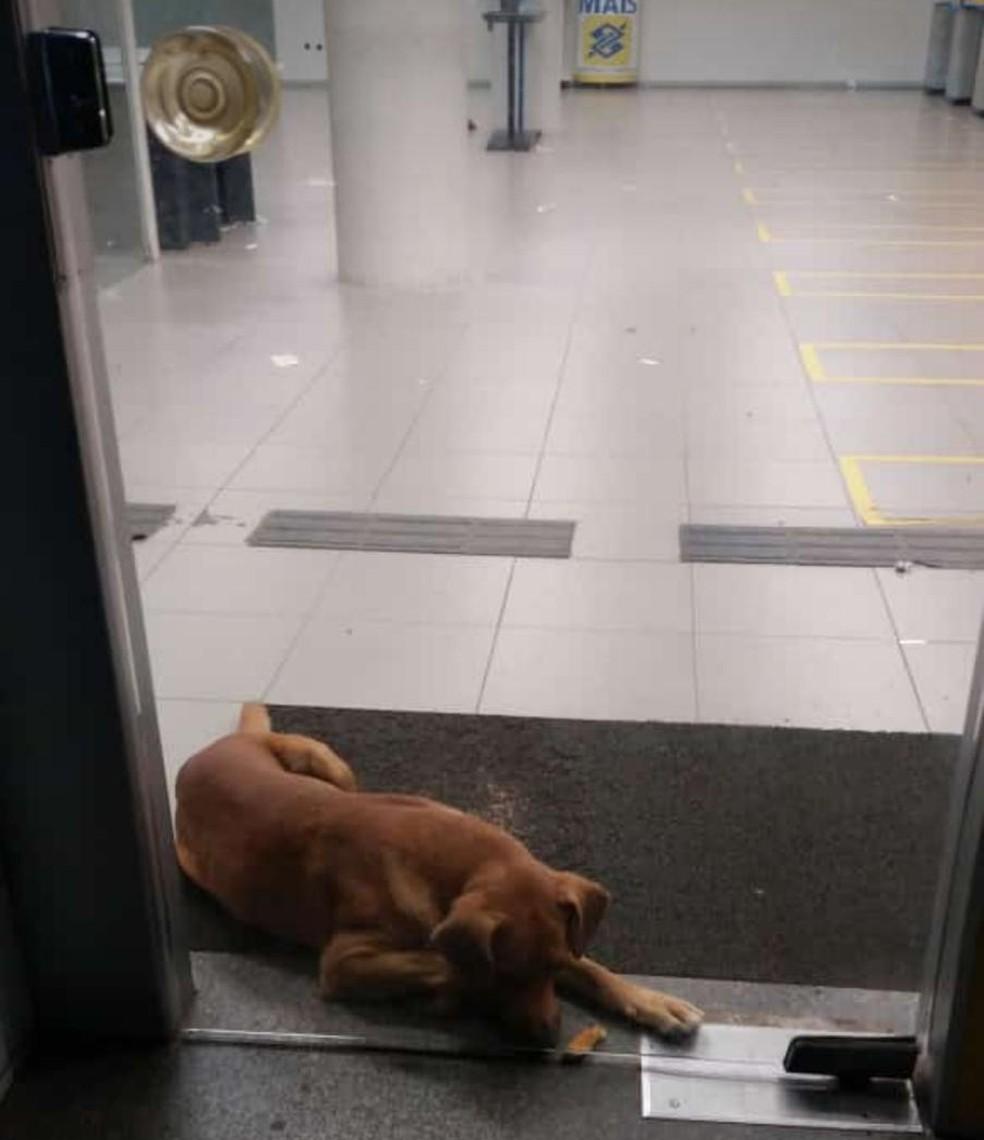 Cachorro passou a noite na agência no Crato — Foto: Reprodução/Sistema Verdes Mares