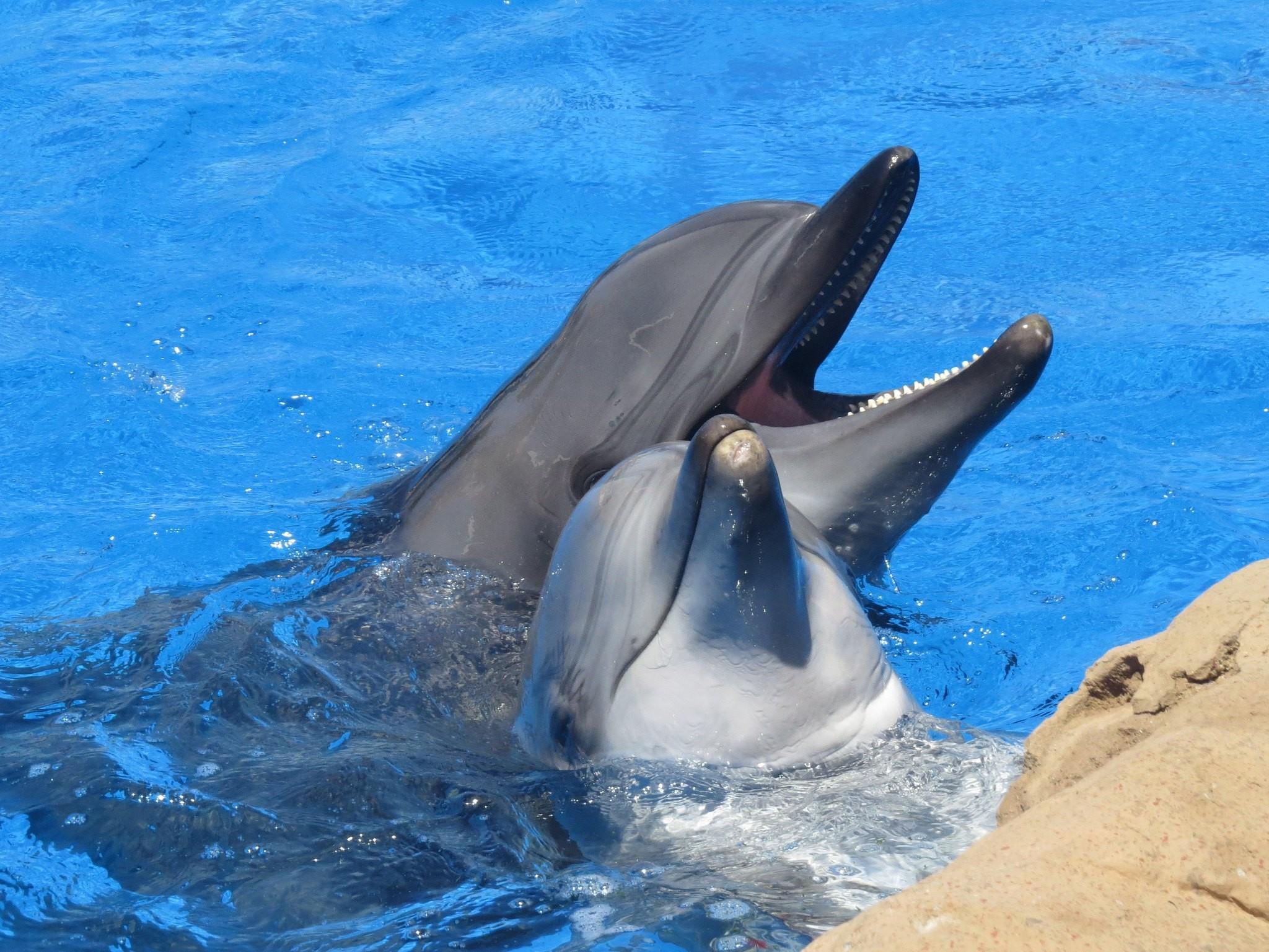 Dolphin Vulva
