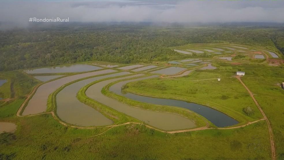 Piscicultor comprou propriedade em Porto Velho para investir na criação de peixes — Foto: Rede Amazônica/Reprodução