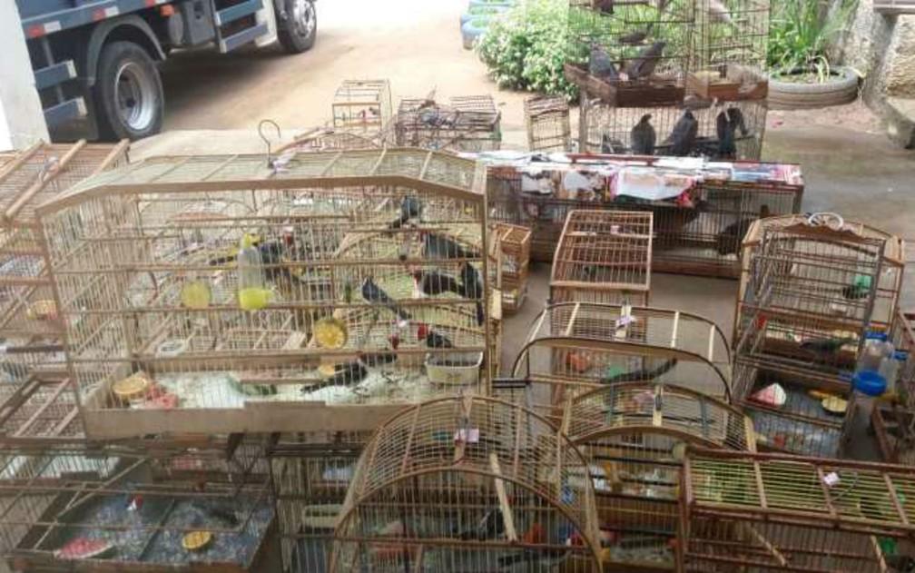 Mais de 550 animais silvestres são resgatados durante operação da PRF em sete cidades do oeste da Bahia â?? Foto: Divulgação/Polícia Rodoviária Federal