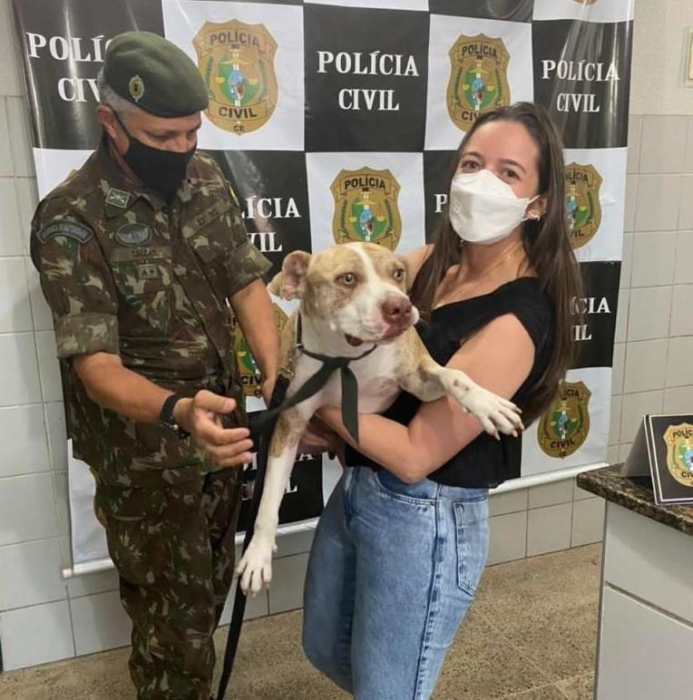 Câmeras de segurança flagram atropelamento de pitbull desaparecido em rua de Fortaleza, e animal é devolvido à tutora