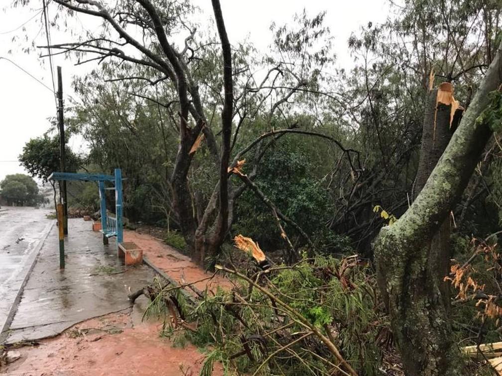 Árvores caíram no bairro Tóffoli, em Marília (Foto: Arquivo Pessoal)