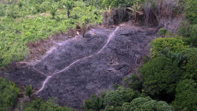 Amazônia - desmatamento (Foto: Cristiano Martins / Arquivo / Ag. Pará )
