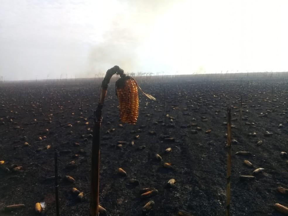 Incêndio foi registrado no sábado (28) em Campos de Júlio (Foto: Cléia Tomé/Arquivo Pessoal)