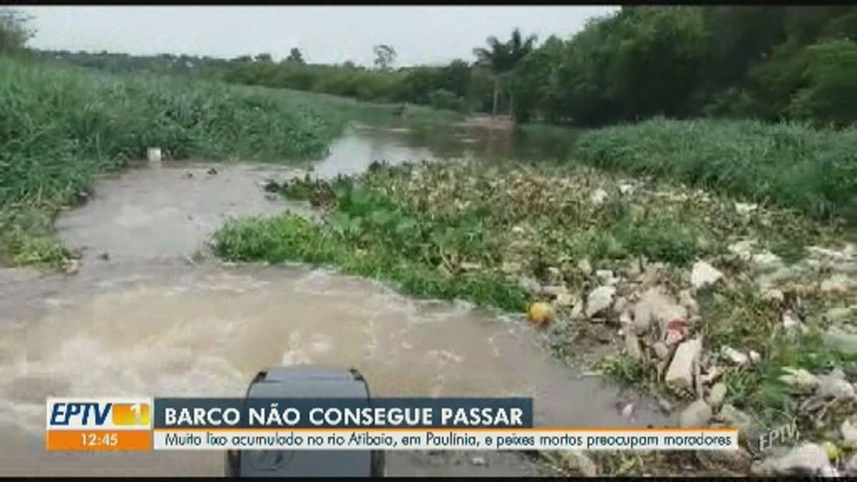 Vídeo mostra lixo e animais mortos em trecho do Rio Atibaia; moradores relatam apreensão - G1
