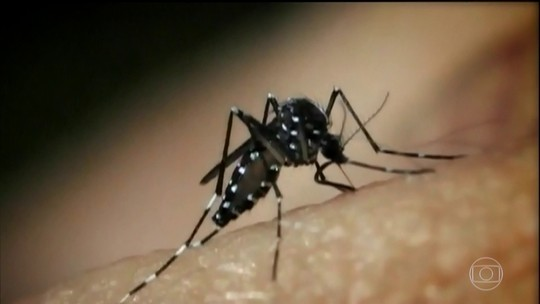 Sintomas da dengue podem durar meses, explica especialista