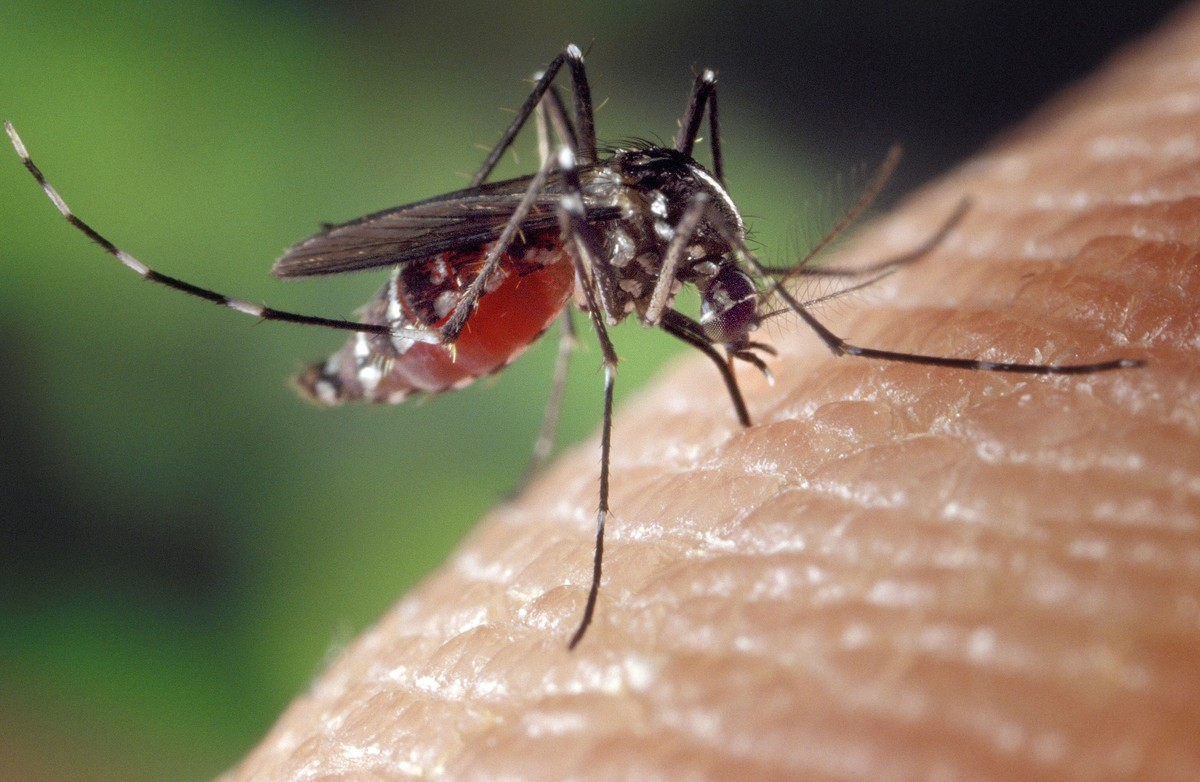 Aracaju está entre as cidades com baixo risco para epidemias e doenças provocadas pelo Aedes aegypti - G1