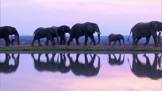 Globo Repórter revela a batalha da África do Sul para preservar a vida selvagem