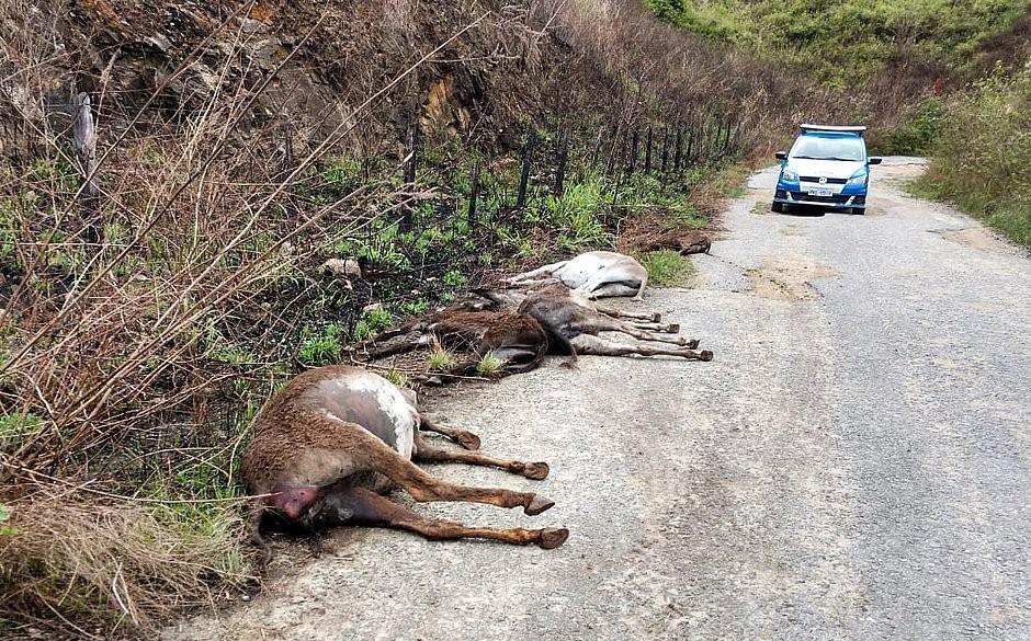 Jumentos mortos estavam entre Itapetinga e Itororó (Foto: Divulgação/Adab)
