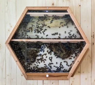BEEcosystem (Foto: Divulgação)