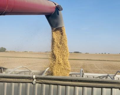 Safra nos EUA chega ao fim com boa colheita, ajuda do governo e reação nos preços