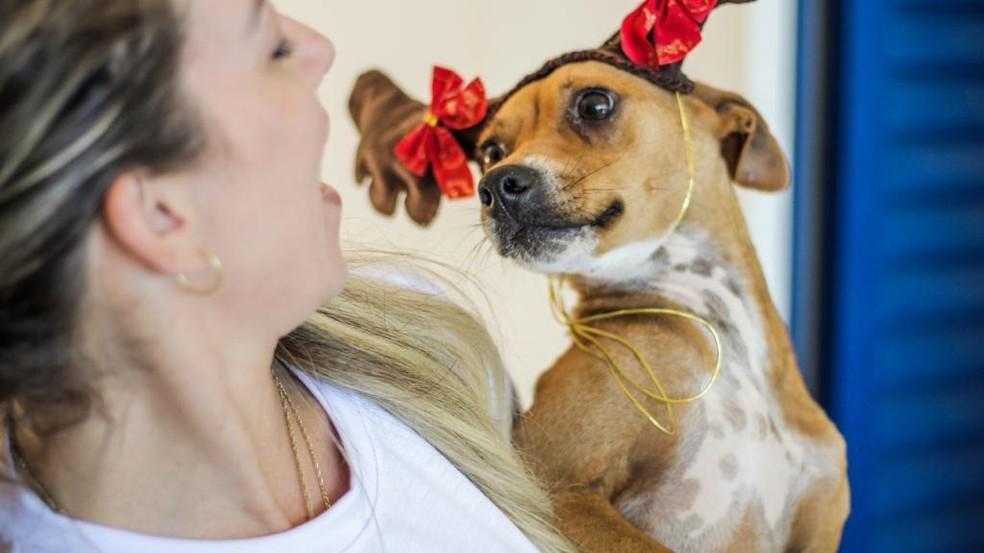 Ao todo 95 cães estão disponíveis para adoção — Foto:  Raquel Schwengber/Divulgação