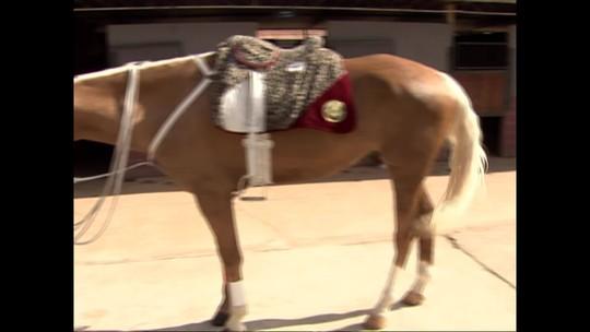 Proclamação da República: conheça a tradição do cavalo Baio, herança do Exército desde 1889