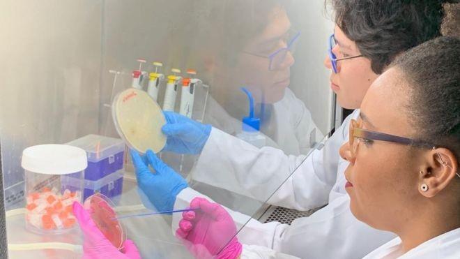 Campeã de infecções, bactéria multirresistente é detectada agora fora de hospitais no Brasil - Notícias - Plantão Diário