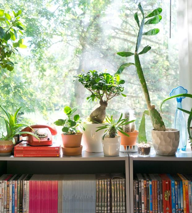 Judith é realmente apaixonada por plantas e elas estão por todos os lados em sua casa. Aqui, algumas espécies que ela cultiva na sala de TV (Foto: Judith de Graaff | JOELIX.com)