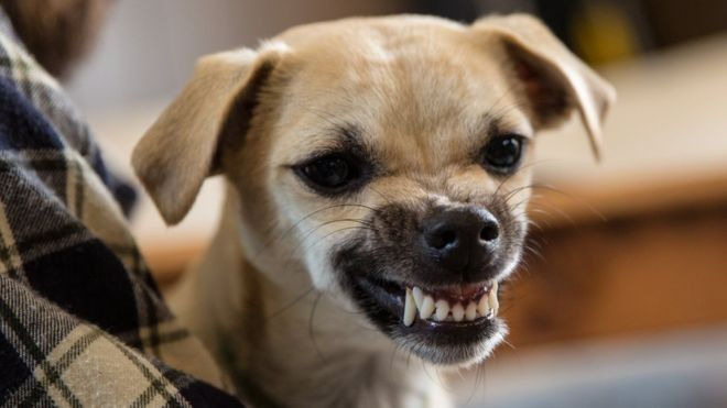 A personalidade do dono afeta as concentrações do hormônio cortisol no seu cachorro (Foto: Getty Images)