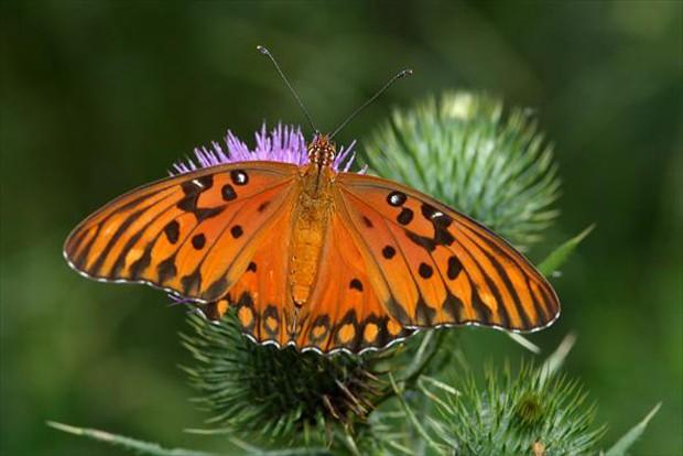 Essa espécie pode ser vista em áreas abertas (Foto: Rudimar Narciso Cipriani)