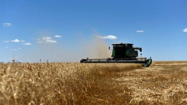 Nos Estados Unidos, apenas 10% do setor automotivo consomem etanol; já no Brasil, esse número chega a 46% da frota (Foto: Reuters via BBC News)