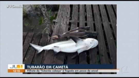 Filhote de tubarão é encontrado por pescadores em Cametá, no PA