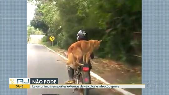 Homem leva cachorro na garupa da moto